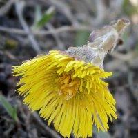 Солнечный цветок :: U. South с Я.ру