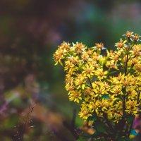 Сердечный цветок :: Наталья Терентьева