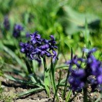 из серии Цветы Весны :: Мария Климова