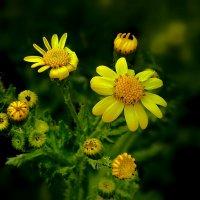 цветочки :: Lena
