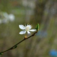 И опять о весне :: Marina Timoveewa