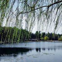 Весна. Лесное озеро. :: Владимир Бровко