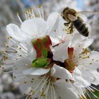 Весна пришла :: Ростислав