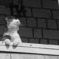 Запахи весны :: Ростислав
