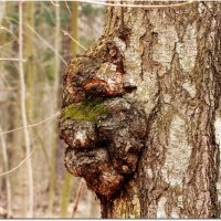 Смотрящий за лесом :: Вячеслав Минаев