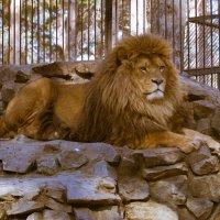 Царь местного разлива :: cfysx