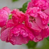 После дождя :: Татьяна Василюк