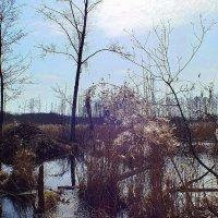 весеннее болото 2 :: Александр Прокудин
