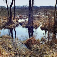 весеннее болото 3 :: Александр Прокудин