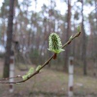 Весна :: Надежда Пеночкина