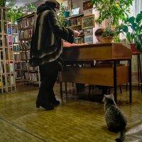 Кот ученый. :: Андрей Лобанов