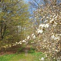 Тропинка в весну... :: Galina Dzubina
