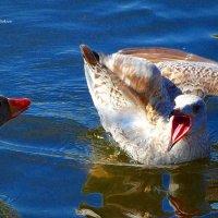 Чайка и гусь :: Nina Yudicheva