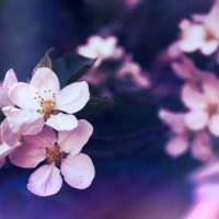Spring flowers :: Amelia Elenberger