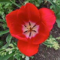 Цветы в апреле 2 :: Валерий Дворников