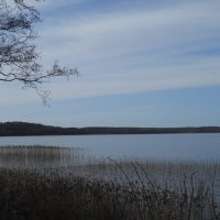 Посадниковское озеро :: Irina Yakovleva