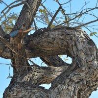 дерево :: Ефим Хашкес