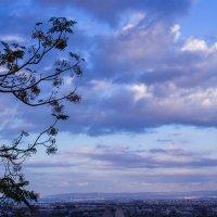 деревья в небесах3 :: Ольга