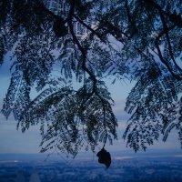 деревья в небесах4 :: Ольга