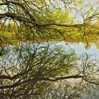 Щупальца на озере :: Alexander Andronik