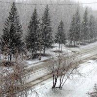 Сегодня выпал снег !!! 13 апреля . :: Мила Бовкун