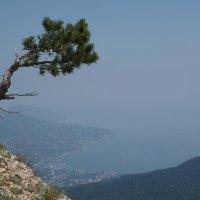Пейзаж с одиноким деревом :: Михаил Юрьевич