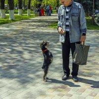 Я тоже умею стоять на задних лапах :: Игорь Сикорский