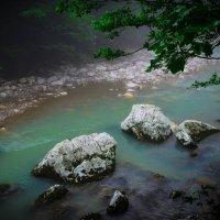 Река Хоста :: Анастасия Губкина