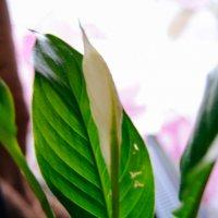цветок :: Света Кондрашова