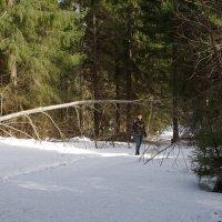 Фотомодель и лес :: Валерий Талашов