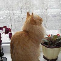 Снежный день. :: Елена (Melena505) Моисеева