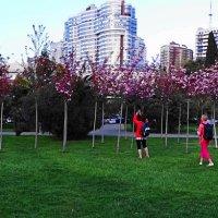 Весна... :: СветЛана D