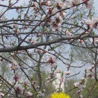 Ода одуванчику в цвету на фоне храма :: Алекс Аро Аро