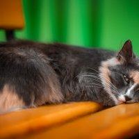 Кошка_Машка :: Studia2Angela Филюта