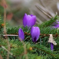 Весна наступает, снег быстро тает... :: Mari Kush