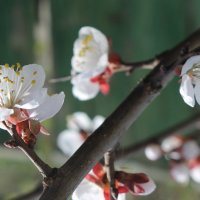 Один раз в год сады цветут.... :: Валентина ツ ღ✿ღ