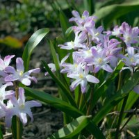 весеннее цветение :: Peteris Kalmuks