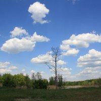 облака :: Руслан Моисеенко