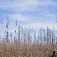 Весеннее болото :: Андрей Попов