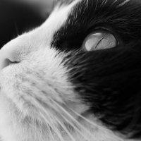 глаза, ка глубокая бездна! :: Ольга Давыдова