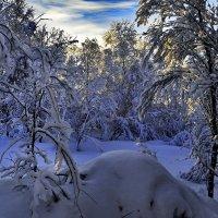 У нас снова зима. :: kolin