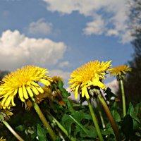 А на пороге нежная весна... :: Galina Dzubina