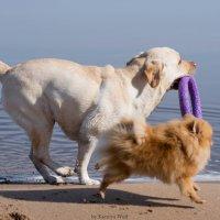 Собаки на пляже :: Kseniya Wolf
