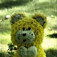 Медвежонок :: Наталия Короткова