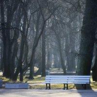 В весеннем парке :: Юрий Цыплятников