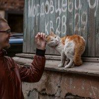 Любовь к животным :: Ольга Давыдова
