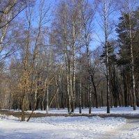 Утро в парке :: Инна Щелокова