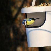 за провизией :: linnud