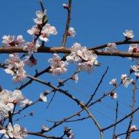 Апрельское небо в цветочек... :: Тамара (st.tamara)