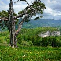 в расцветающем радостном мае :: Elena Wymann